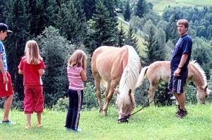 Pferde - Pension Reiterhof in Maria Alm